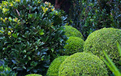 Green-Only Gardens Draw the Eye and Soothe the Spirit