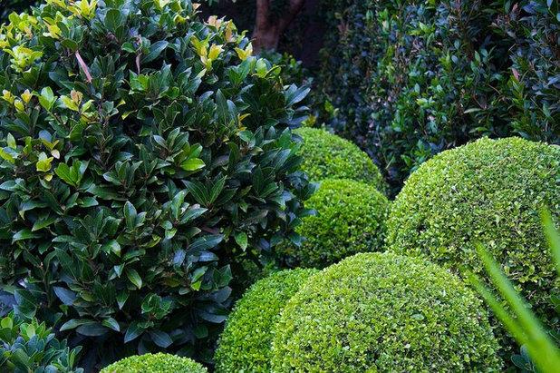 Conseils de pro pour un jardin color m me en hiver for Evergreen pflanzen