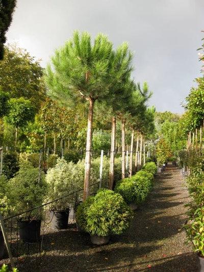 Mediterran Garten by Architectural Plants Ltd