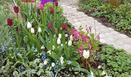 Which Shade-loving Bulbs to Plant Now for Spring