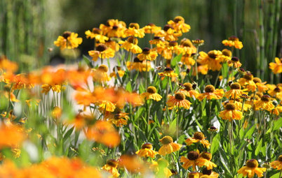 What's in a Name? See 6 Wildflowers That Aren't 'Weeds' at All