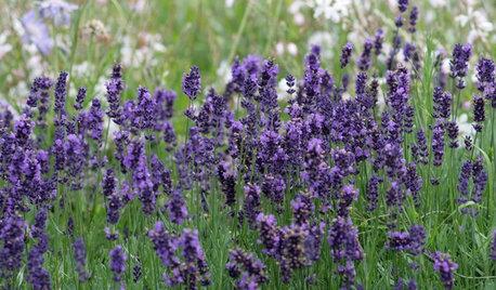 10 idées faciles pour cultiver votre jardin au mois de juin