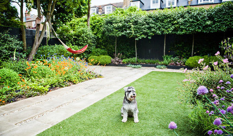 Pro Panel: How to Make Your Small Urban Garden Dog Friendly
