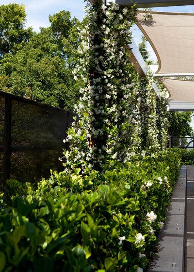 Contemporaneo Giardino by Andrew Pawsey Landscape Architect