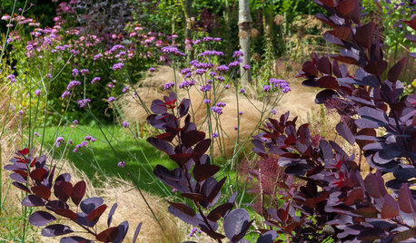 Bring the Beauty of Prairie-Style Planting to Your Garden