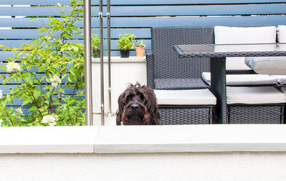 How to Create a Stylish Dog-Friendly Backyard in the City