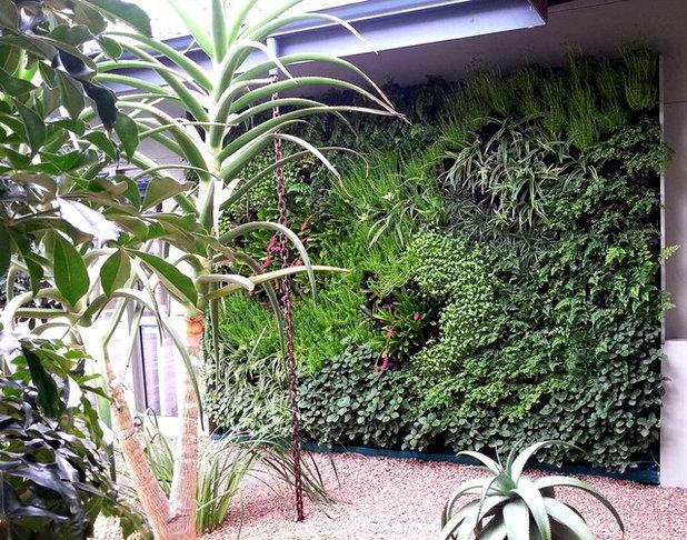 Contemporary Garden by Modula' Greenwalls