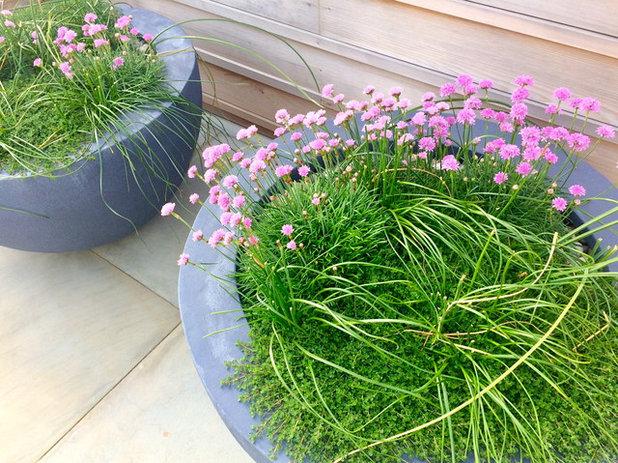 Trendy Have by Roger Webster Garden Design