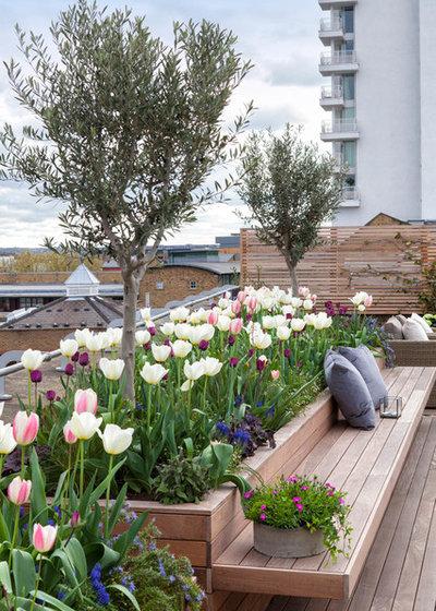 Transitional Garden by The Garden Builders