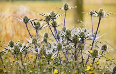 Die Distel – stachlige Schönheit im Garten