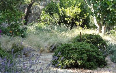 Pregunta al experto: Breve guía para que tu jardín sea sostenible