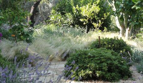 9 consejos para disfrutar de un jardín fácil de mantener
