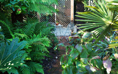 Garden Tour: A Stunning Tropical Garden Before and After