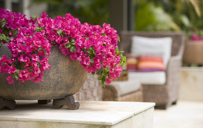 8 Climbing Plants Great for Indian Balconies & Gardens