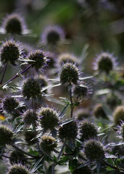Classico Giardino by Laara Copley-Smith Garden & Landscape Design
