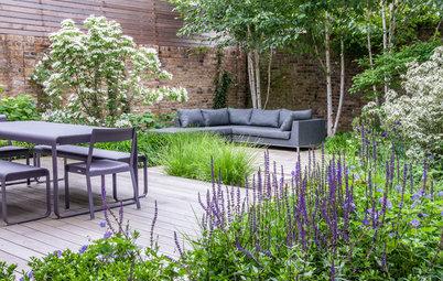 Сад недели: Палисадник перед домом в Лондоне