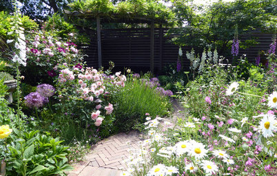 Garden Tour: A Small Urban Plot Gets a Wildlife-friendly Revamp