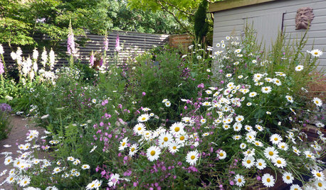 How to Grow and Care for Wildflowers in Your Garden
