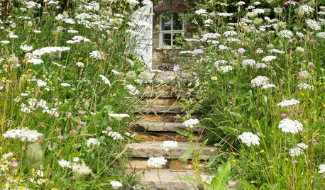What to Know About Growing a Wildflower Garden From Seed