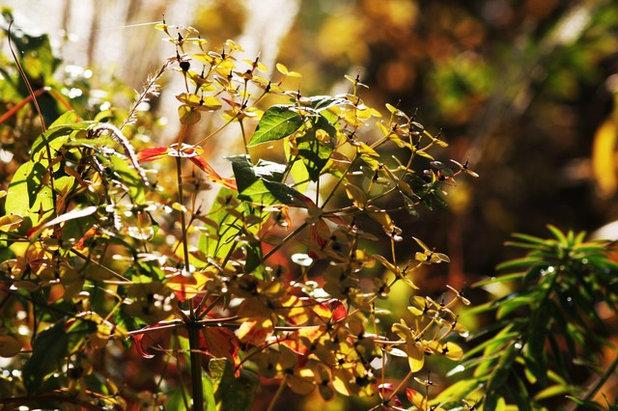 Contemporaneo Giardino by Laara Copley-Smith Garden & Landscape Design