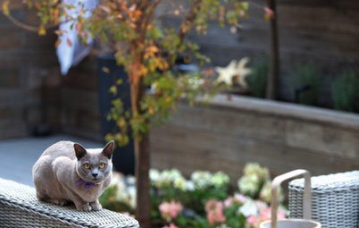 How Do I... Create a Pet-Friendly Garden?