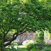 Why, When and How to Plant a Tree Properly