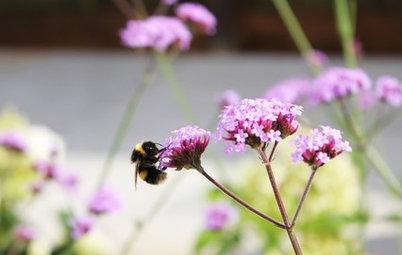 In zehn Schritten zu einem umweltfreundlicheren Garten
