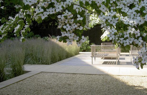 16 alberi ideali per piccoli giardini