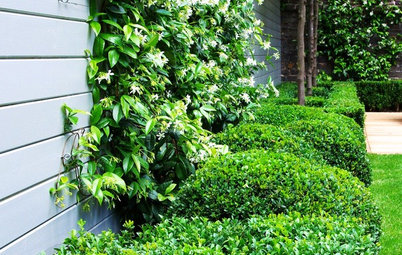 Wonder Wall: The Climbing Plants That Can Improve Your Garden