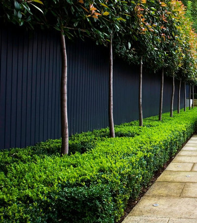 How low can hedges go discover unusual garden borders for Garden hedge designs