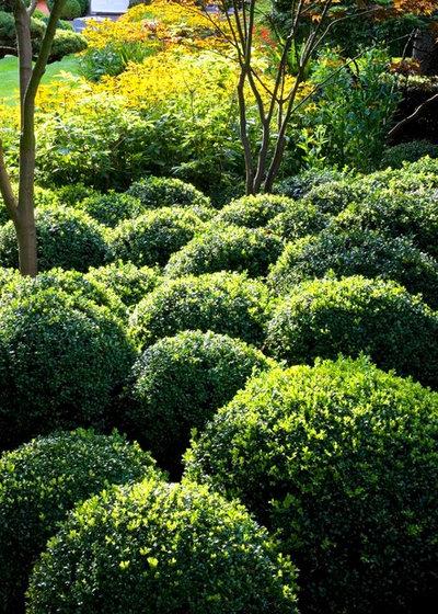 conseils de pro pour planter des arbustes persistants en septembre. Black Bedroom Furniture Sets. Home Design Ideas