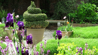 Topiary on a budget - traditional town garden