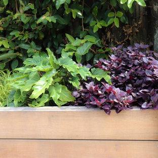 Jardin contemporain Auckland : Photos et idées déco de jardins