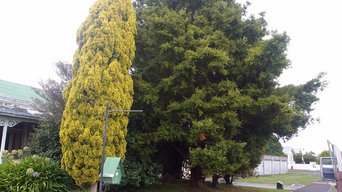 Tree removal &stump grinding Levin