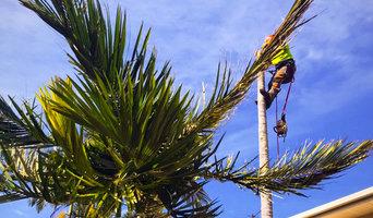 Tree Removal Logan Village