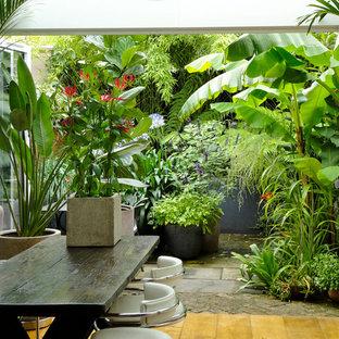 Foto på en tropisk trädgård