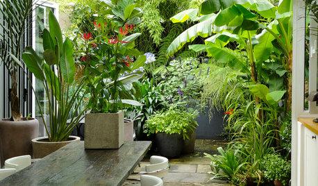 Houzz в саду: Тропический сад в Лондоне — всего 32 кв.м