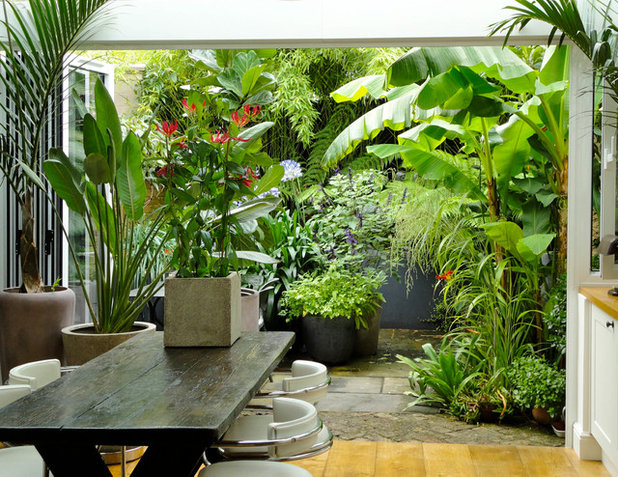 Tropical Garden by antonia schofield garden design