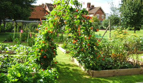 How to Pick the Best Climbing Plants for Your Garden