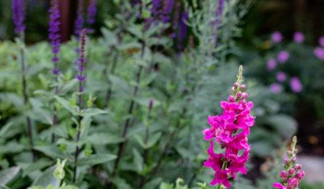 UK Garden Tour: A Leafy Backyard That Looks Lush in Every Season