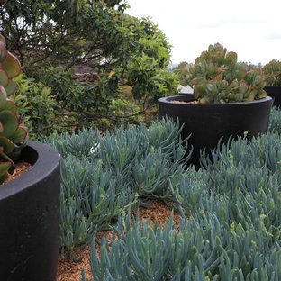 Design ideas for a contemporary landscaping in Sydney.