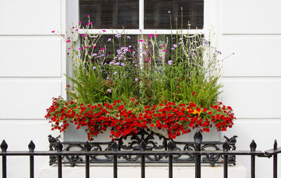How to Plant a Beautiful, Thriving Window Box Garden