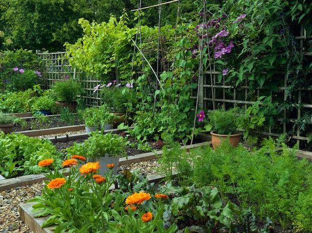 Traditional Landscape by Joanne Winn Garden Design