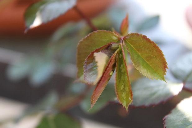 Сад Antiparassitari naturali