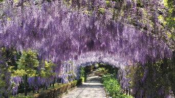 Bardini Garden restoration