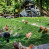 Italian Houzz: Old-Fashioned Charm for a Family's Alpine Refuge