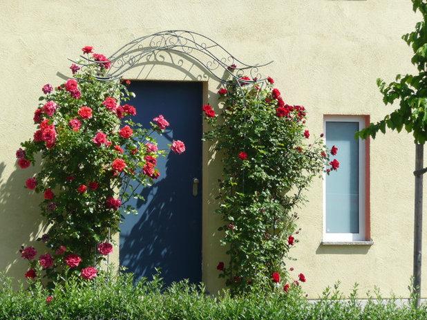 Rote Rosen und rote Blüten mit anderen Pflanzen kombinieren