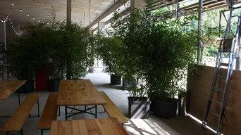 Bambus für Richtfest