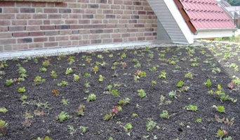 Dachbepflanzung
