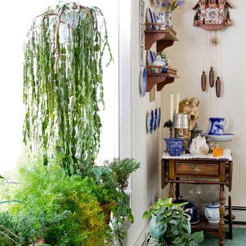 Dining room plants